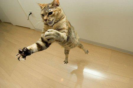 fotos tiernas y graciosas de gatos